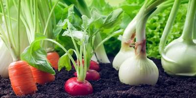 Potager et végétaux