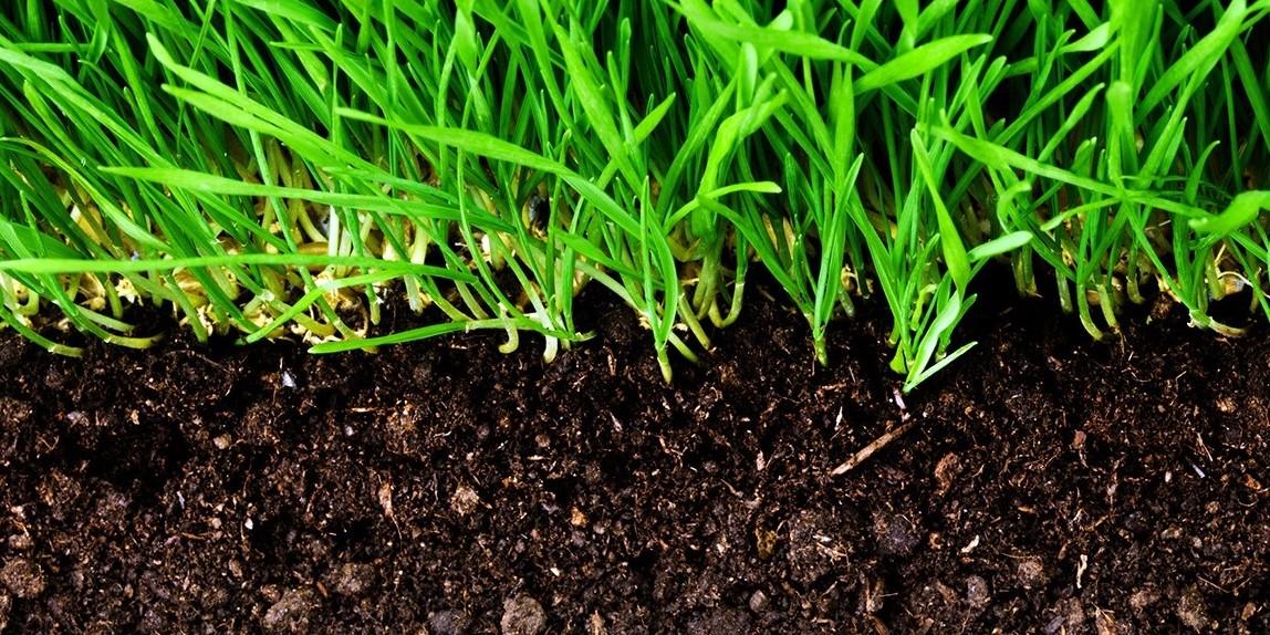 Terreaux, engrais et traitements